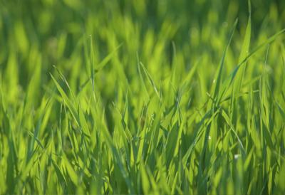 agri_ecologica